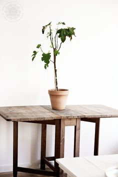 by:på min gata i stan #plants #indoorsgarden
