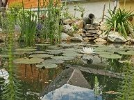 Kerti tó a kertben - a tóépítés menete. Hogyan készül a kerti tó?