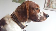 Op zoek naar een handgemaakte, op maat gemaakte, lederen halsband van een prachtige kwaliteit? Kijk dan, net als wij, eens op http://www.halsbanden.com/