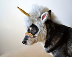 """Important! A unicorn """"hat"""" for dogs!"""