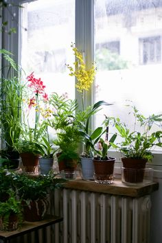 Ferns and orchids above a radiator in a large window -- Lost in Plantation: Mama Petula
