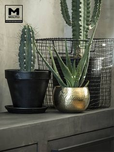 Restyling woonkamer : woonkamer door molitli interieurmakers, industrieel Here you will find all pho Aloe Vera Plant Indoor, Best Indoor Plants, Cool Plants, Cactus Decor, Plant Decor, Cactus Plants, Garden Plants, Plant Images, Plant Pictures