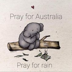 Pray for Australia. For all the people and animals of this beautiful country 🙏❤ Bushfires In Australia, Fortune Favors The Bold, Nerdy Shirts, Inclusive Education, Baby Koala, Koala Bears, Fish Cat Toy, Book People, Vintage Art Prints
