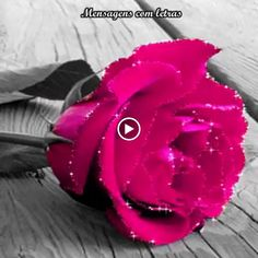 Good Morning Beautiful Flowers, Pretty Flowers, Types Of Roses, Flower Patch, Holiday Photos, Colour Images, Color Photography, Rose Buds, Blue Lace