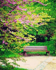 #summer #bruxelles #belgium #sun #sunny #warm #beautiful #sky #clearskys #season #seasons #instagood #instasummer #20likes #nature #nikon3100 #sunshine #summertimeshine #banc #akapicturesart #photo #green #fleur