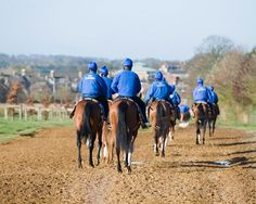 Godolphin horses in Newmarket