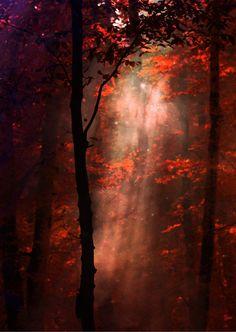 autumn by beyzayildirim77.deviantart.com