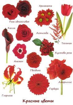 Красный свадебный букет невесты – купите его в Obradoval.ru!   Идеи для букета. Заказ. Доставка