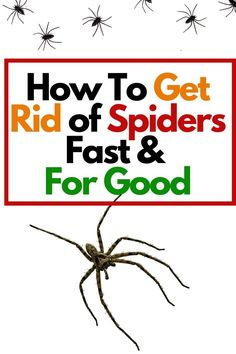 Get Rid Of Spiders, How To Repel Spiders, What Kills Spiders, Diy Pest Control, Bug Control, Mice Control, Household Cleaning Tips, Household Expenses, Cleaning Hacks