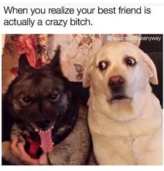 Funny dog friends BFF crazy fun