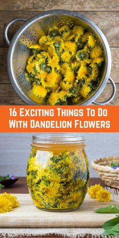 16 Exciting Things To Do With Dandelion Flowers 16 Exciting Things To Do With Dandelion Flowers Dandelion Uses, Dandelion Jelly, Dandelion Recipes, Dandelion Flower, Dandelion Benefits, Dandelion Wine, Herb Recipes, Canning Recipes, Salad Recipes