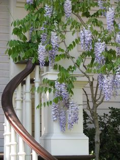 Garden Design Boston, MA | Home Garden & Landscape Architect
