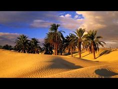 Things to do in Tunisia. Fun things to do in Tunisia with kids. Places to visit in Tunisia. Plan a trip to Tunisia. Desert Oasis, Palm Desert, History Channel, Desert Sahara, Dates Tree, The Kinks, Music Drawings, Music Crafts, Joker