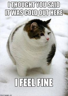Not So Cold Actually