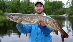 Meet Your Species: Northern Pike | Travel Manitoba