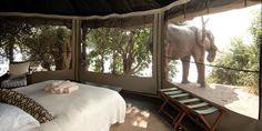Chongwe River Camp - Lower Zambezi National Park #Zambia