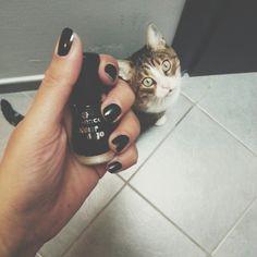 Iconosquare - Instagram WebViewer #smalto #black #nero #nailpolish #unghie #nails #cat #gatto #cute