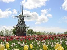 Welkom ! The Tulip Time festival in Holland, Michigan is world famous and we welcome visitors from all over the world each year!