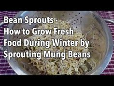 Bean Sprouts - How to Grow Fresh Food During Winter by Sprouting Mung Beans - YouTube