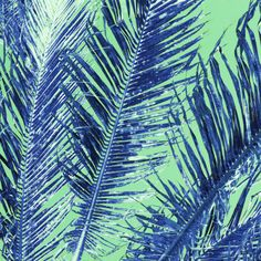 Tropical Palm Blue by Amy Siahttp://society6.com/product/tropical-palm-blue-green_print?curator=amysia