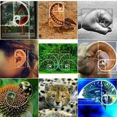 You are another me one Art Yes, everything with the golden ratio is so easy to recognize . Fibonacci In Nature, Spirals In Nature, Fibonacci Spiral, Fibonacci Number, Maths In Nature, Fotografia Tutorial, Sacred Geometry Symbols, Sacred Architecture, Composition Design
