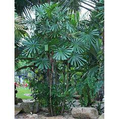 Unusual Plants, Rare Plants, Exotic Plants, Tropical Plants, Tropical Gardens, Palm Tree Flowers, Palm Trees, Landscape Design, Garden Design