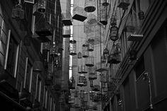 Urban nesting grounds