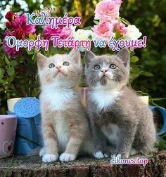 Good Morning Gif, Greek Quotes, Cats, Wednesday, Amazing, Gatos, Cat, Kitty, Kitty Cats