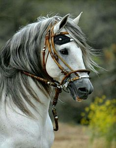 Peruvian Paso in traditional tack. - Horses Funny - Funny Horse Meme - - Peruvian Paso in traditional tack. The post Peruvian Paso in traditional tack. appeared first on Gag Dad. Most Beautiful Horses, All The Pretty Horses, Beautiful Things, Horse Photos, Horse Pictures, Beautiful Creatures, Animals Beautiful, Animals And Pets, Cute Animals