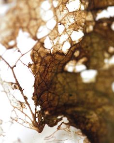 beautiful breaking down of a leaf Decay Art, A Level Art, New Theme, Natural Forms, Texture Art, Flower Photos, Craft 2016, Art Projects, Beautiful Pictures