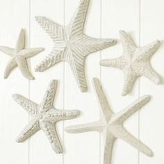 Tropical Accessories & Decor Products