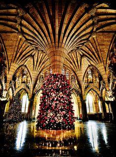 Tree on Parliament Hill, Ottawa