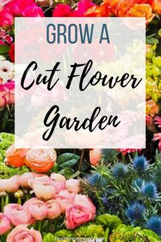 flower garden care Do you love bouquets and centerpieces, but dont want to buy them Grow a cut flower garden! Get some great tips on what and how to grow cut flowers here! Cut Flower Garden, Flower Farm, Flower Pots, Flower Gardening, Cut Garden, Growing Flowers, Cut Flowers, Planting Flowers, Wild Flowers