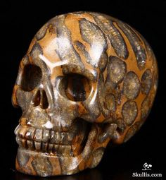 Petrified Coral Fossil Crystal Skull