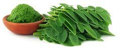 Moringa - das grüne Kraftwunder » Gesund sein heute