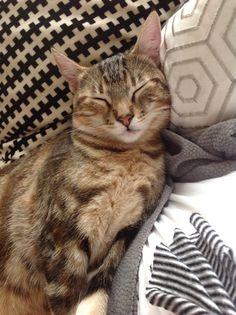 Emmy 6 Month Old Kitten