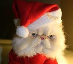 a persian christmas