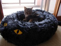That is a cool cat bed!!