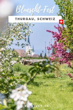 AUSFLUGSTIPP THURGAU: Die Bluescht-Saison im Thurgau bedeutet ein Meer an Blüten. Denn hier wird ein Grossteil des Schweizer Obst angebaut. Apfel, Kirsch, Birnen u.v.m.  Tipps für die Region: der Apfelweg in Altnau, das Bluescht-Fest oder eine Übernachtung im Bubble-Hotel. Reisen In Europa, Travel Europe, Bubble, Pony Rides, Switzerland Destinations, Europe Travel Tips, Pears, Swiss Guard
