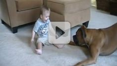 Boxer kisses;) from your friends at k9katelynn;) k9katelynn.com!Faith-based videos with uplifting and inspiring messages. From cuddly puppies to cute kids, this is your place for faith-filled entertainment.