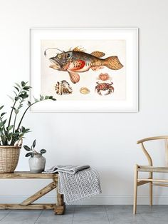 Sibylla Merian, Life Poster, Fish Wall Art, Nautical Wall Decor, Sea Snail, Vintage Nautical, Deep Sea Fishing, Original Image, Fine Art Paper