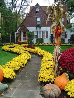 Бордюр из цветов. Какие низкорослые цветы посадить в клумбу, чтобы цвели все лето? Виды и сорта растений, обустройство клумб.