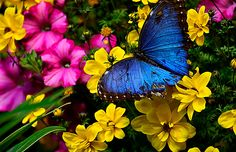 Butterfly Vibrant Nature Flowers Color Blue Pink Yellow Green Decor Fine Art Print.  via Etsy.