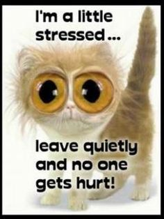 Stressed Kitty for childcare workers, teachers without EAs, EAs and stayat home mums especially Le