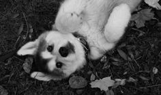 dog. lay down.. now roll over! good boy :)