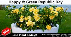 #Nurserylive is giving away plants for FREE on this Republic day (23-27 Jan).  Subscribe & #Win awesome plants daily.