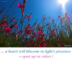 ... a #heart will blossom in #light's presence ~ open up in colors !