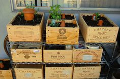 wine crates for gardening