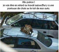 Personne te croira mec ! https://www.15heures.com/photos/p/46612/