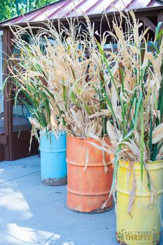 Fall barrels full of corn stalks and cattails for a backyard fall wedding! What a fun idea.